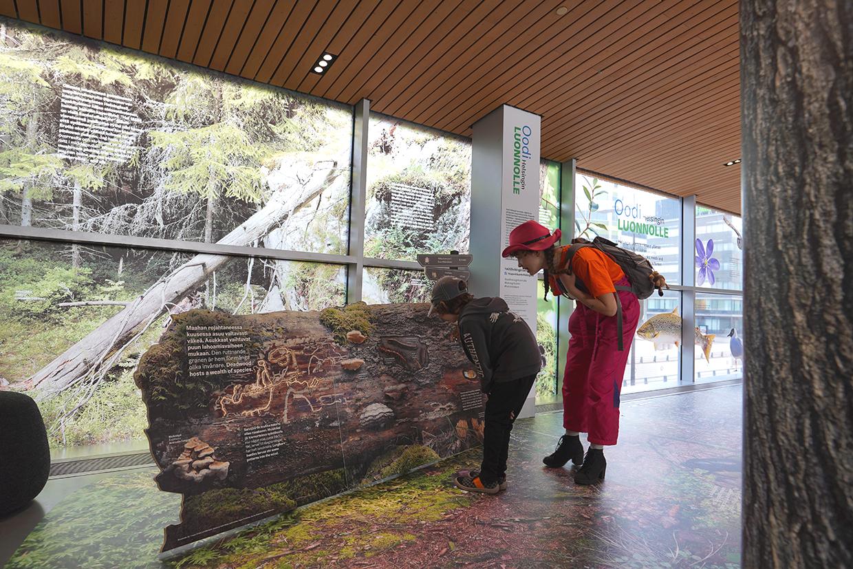 Coloro toteutti Helsingin kirjasto Oodissa pidetyn näyttelyn, Oodi Helsingin luonnolla, kaikki lattiateippauksista ikkunateippauksiin ja muihin elementteihin.